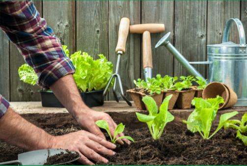 Compost Plant